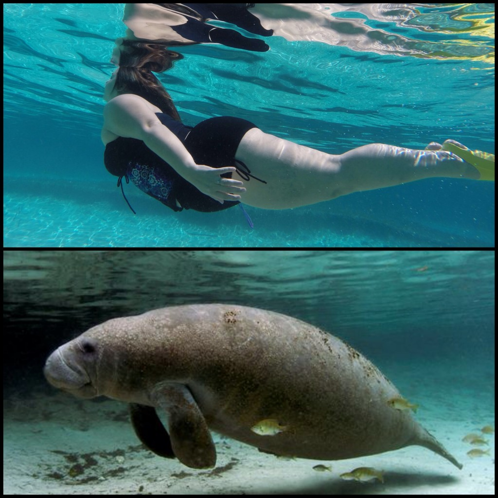 manatee or mermaid?
